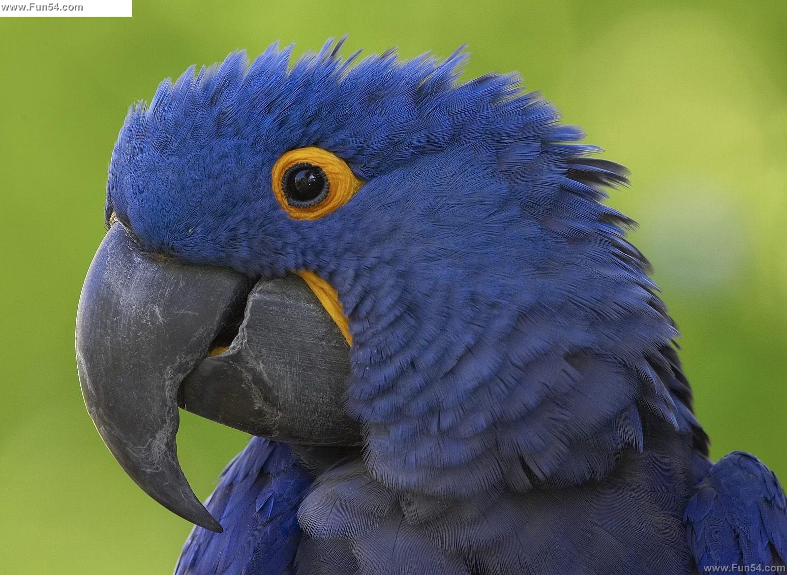 Cute Fat Cat Wallpaper Funny Blue Parrot Desktop Wallpaper Funny Animal