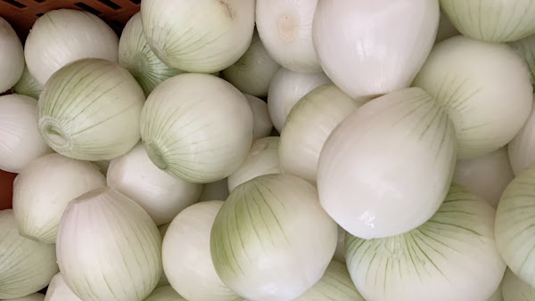 彰化縣政府推廣洋蔥入菜 吃在地、食當季