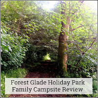 Beautiful forest glade, situated in the Black Down Hills