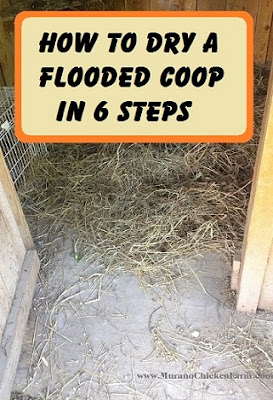 How to dry a wet coop