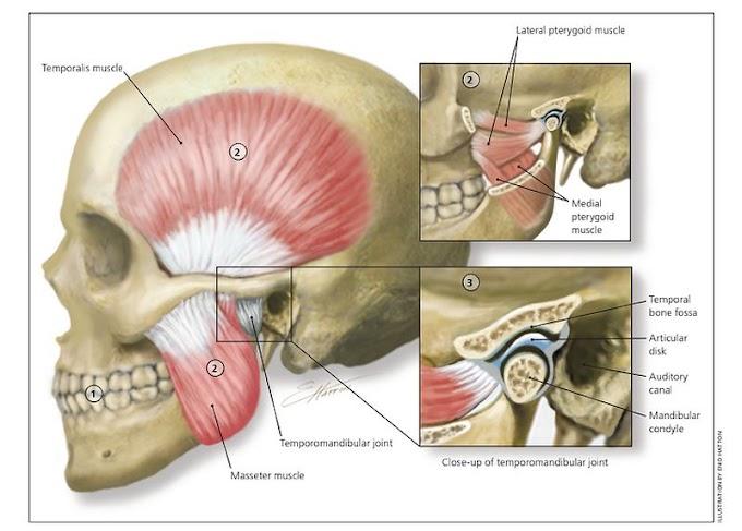 PDF: Diagnosis and Treatment of Temporomandibular Disorders