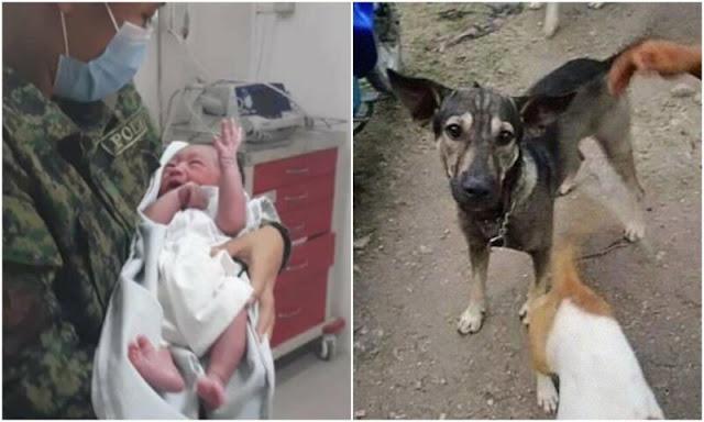 Собака лаяла на прохожего и вела его в сторону, пытаясь показать на ребенка которого нашла