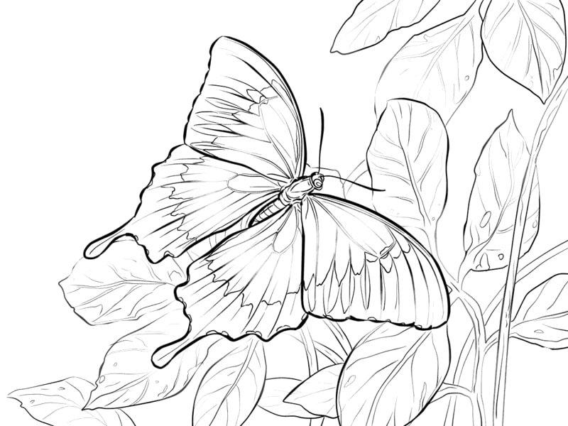1001 Gambar Kupu Kupu Dan Bunga Animasi Terbaru Cikimm Com