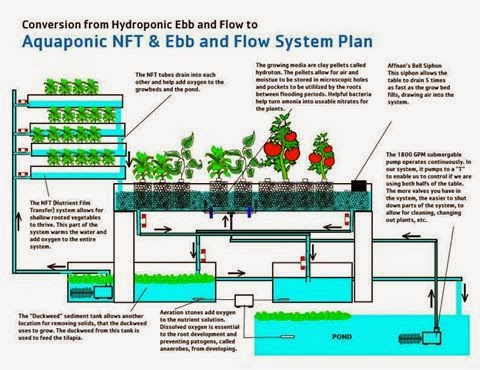 Click Here. Aquaponics 4 You.