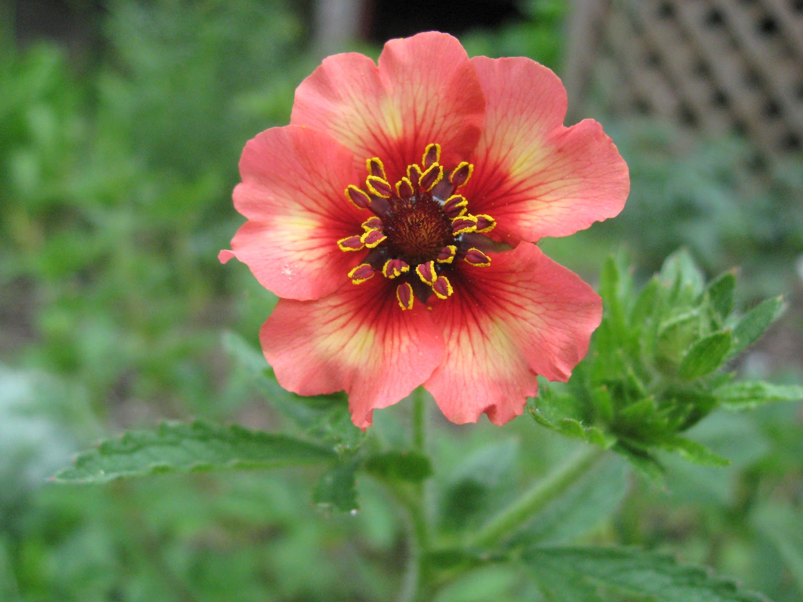 May flowers antijenic drift may flowers mightylinksfo