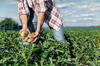 Ministério da Agricultura abre inscrições do Garantia-Safra na Paraíba