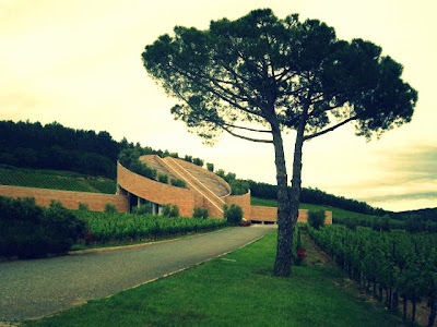 Pine tree, vineyard and Mario Botta's wine cellar at Petra Winery Suvereto