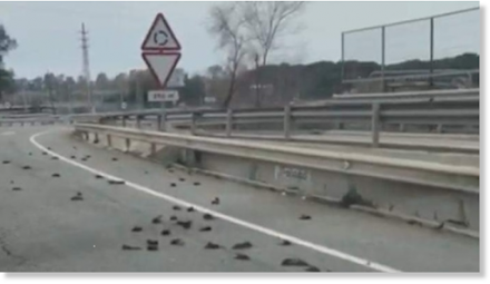 Έβρεξε .. πουλιά στην Ισπανία