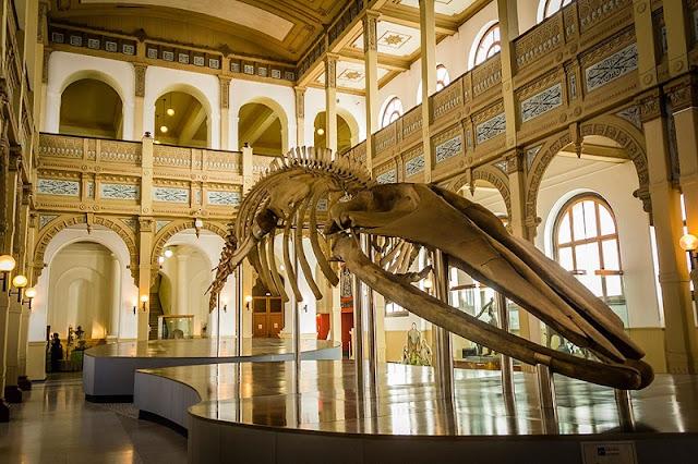 História do Museu Nacional de História Natural
