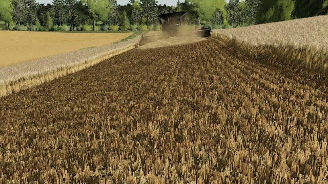 Barley / wheat texture v1.0 FS19