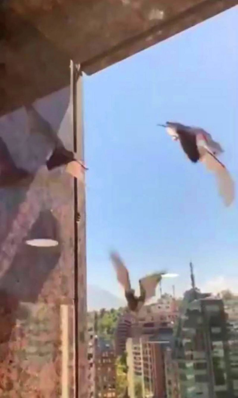 Desorientada colonia de murciélagos asustó a vecinos de edificios de Las Condes