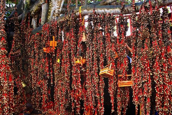 Shivaratri Special