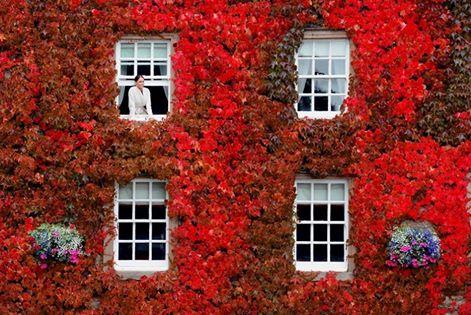 climbing plants for autumn colour - Climbing Plants