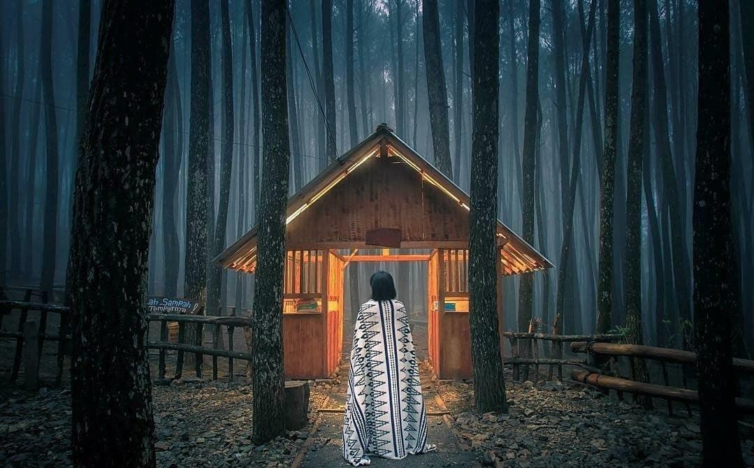 Tiket Masuk Hutan Pinus Asri