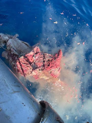 IMG 20200904 WA0005 - Como todos los años los arrastreros de Santa Pola cogiendo atunes en descomposición