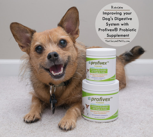 Review: Improving your Dog's Digestive System with Profivex® Probiotic Supplement