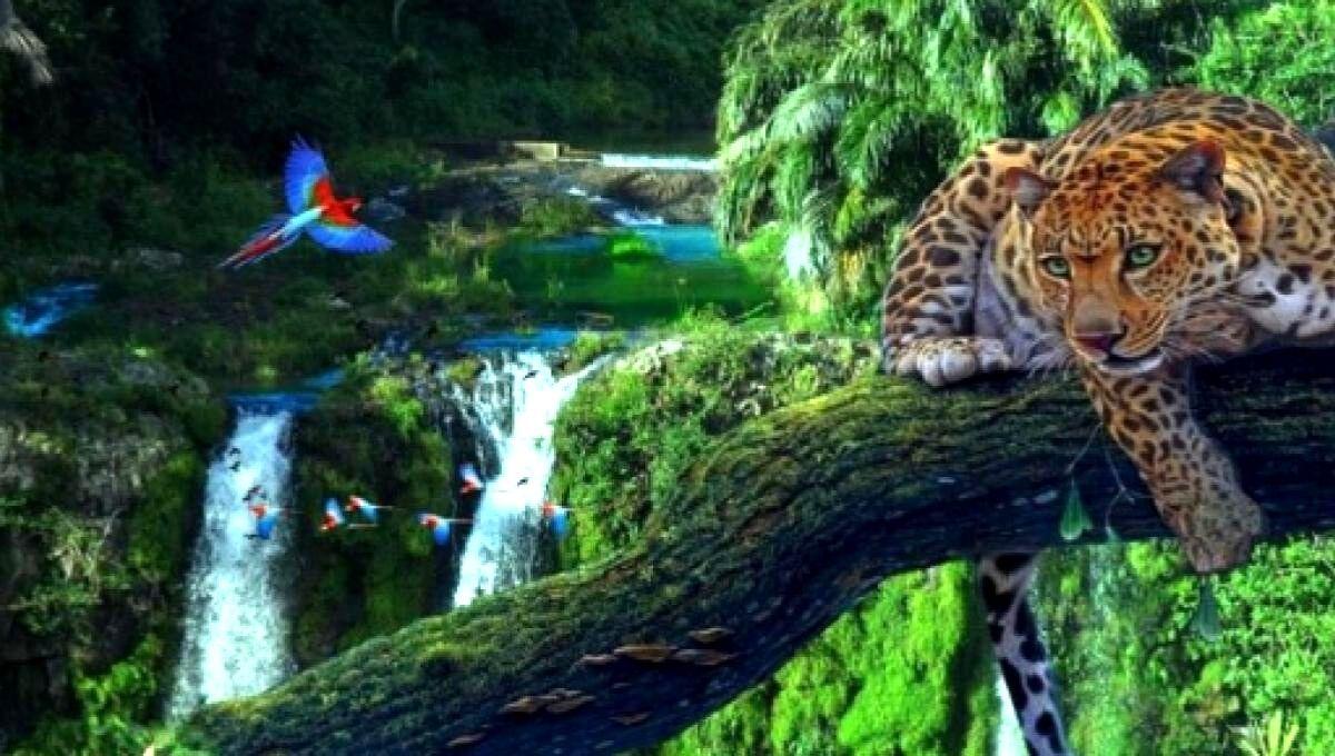 Proteção às Florestas - Hábitos que contribuem