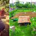 คำพ่อสอนเริ่มผลิผลแล้ว!! หนุ่มเมืองกรุง ลุยเปลี่ยนพื้นปูนกลางลาดพร้าว จนกลายเป็นผืนดินเกษตรกรรม