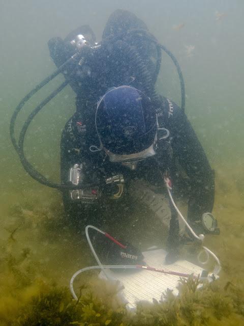 Tutkimussukeltaja kirjoittaa muistiinpanoja veden alla