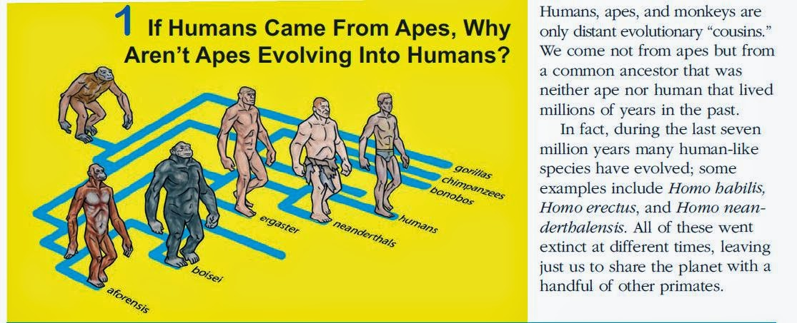 an argument against the evolution of humans from apes Why evolution is false we continue in the course of making his argument 12 there really is a substantial genetic difference between apes and humans which.