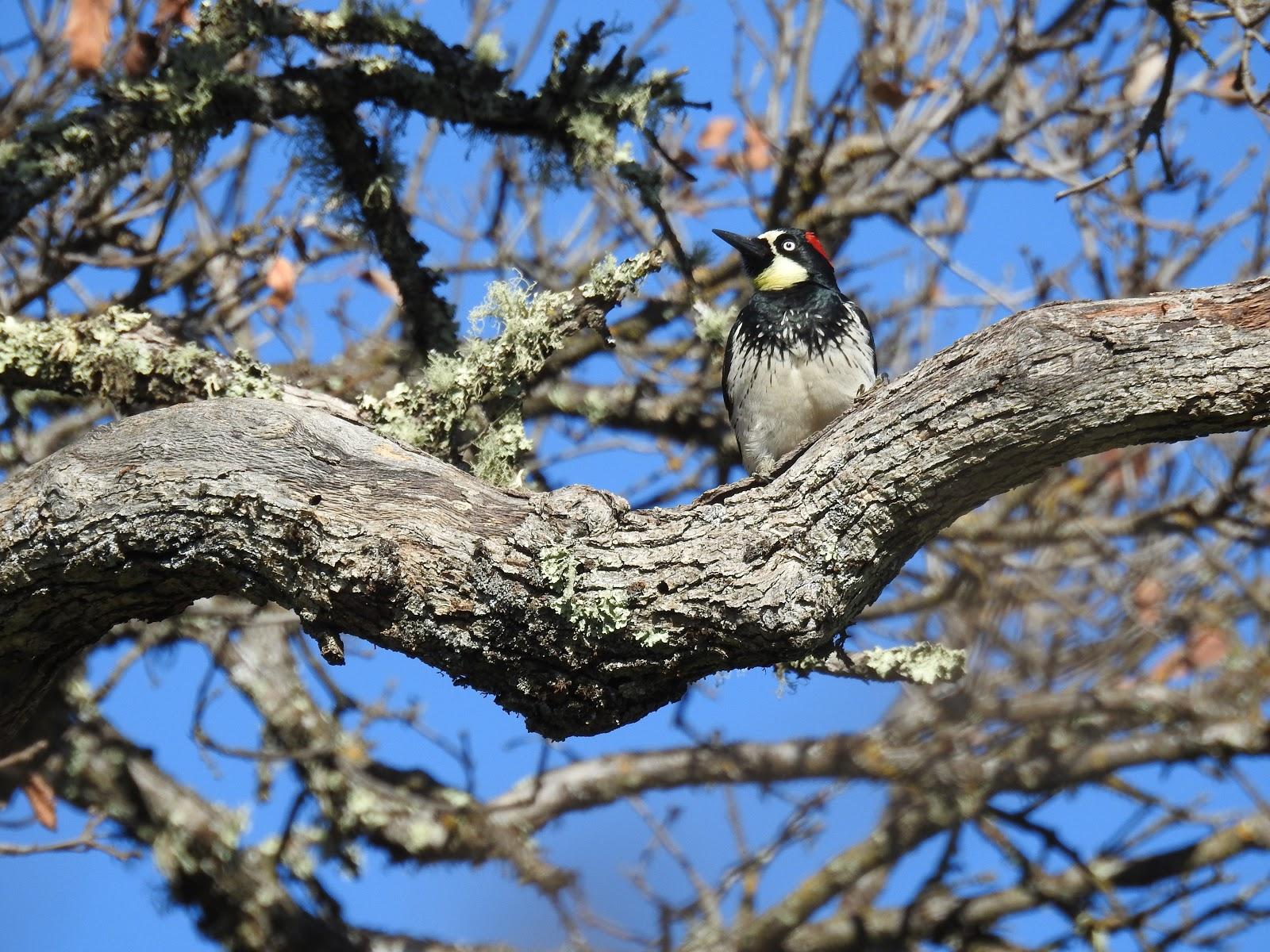 bird nature preservation