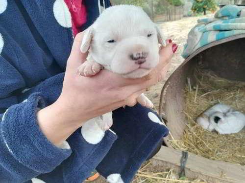 cachorros talla pequena 3