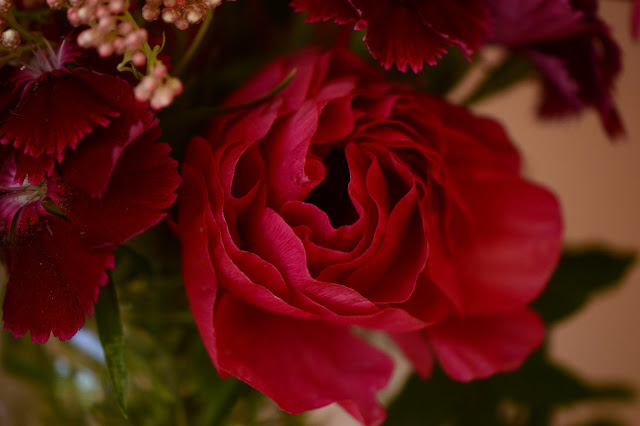 ranunculus, monday vase, ranunculus, cutflower, dianthus, small sunny garden, desert garden, amy myers