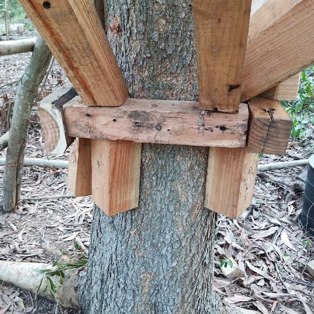 สร้างบ้านต้นไม้ในป่า เดือนเดียวเสร็จ บรรยากาศดี อากาศดี