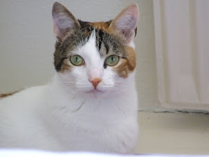 Onze poes Isabelle
