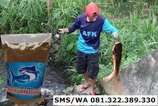 Umpan Serbuk Ikan Lele Indukan