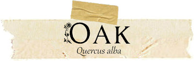 Magical and Medicinal Uses of Oak. Includes FREE BOS page!