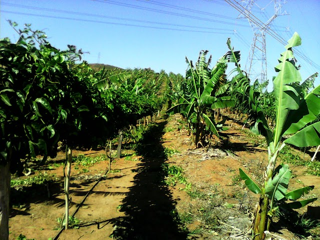 Empresário de Sussuapara investirá no plantio de frutas em Elesbão Veloso