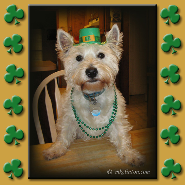 Westie wearing green necklace and green St. Patrick's Day hat