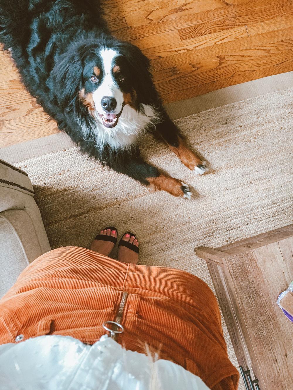kylo the mountain dog