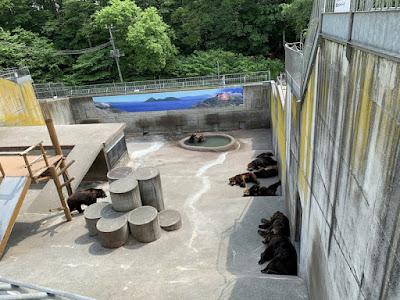 だらけグループの熊