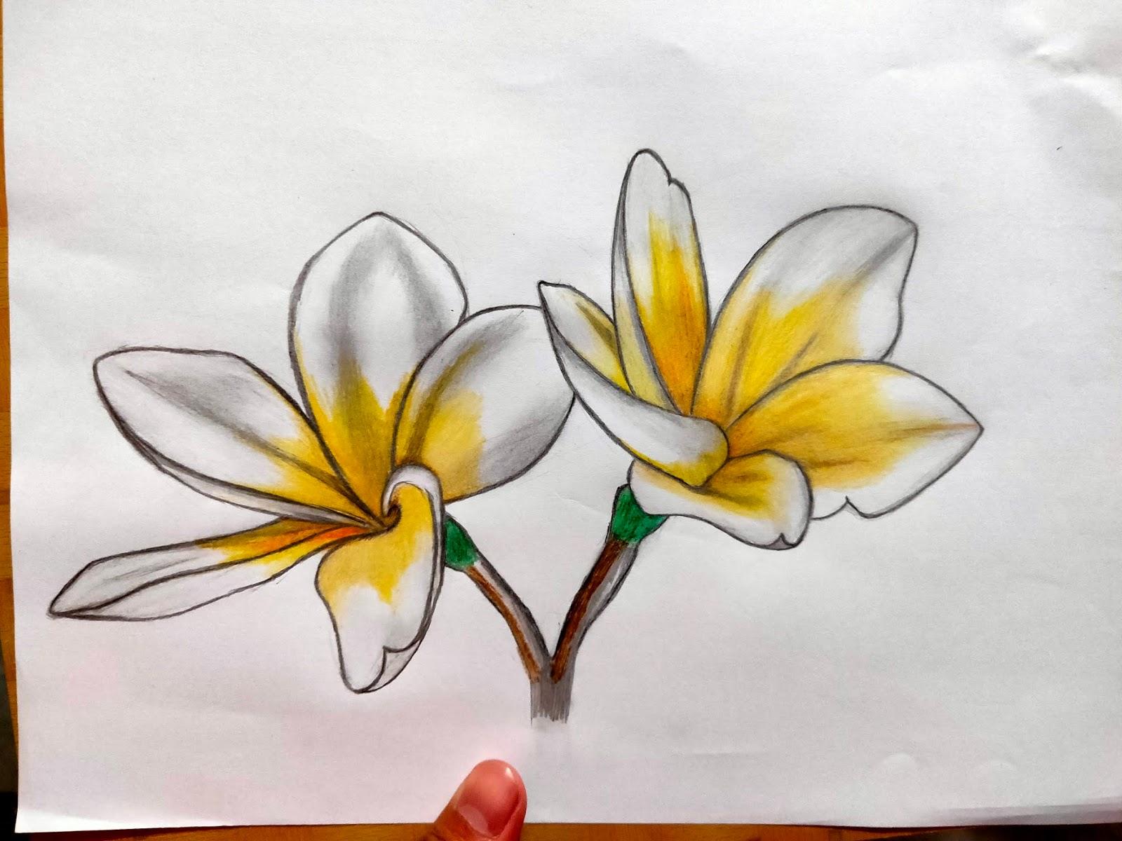 6 Langkah Mudah Menggambar Bunga Kamboja Jafarull