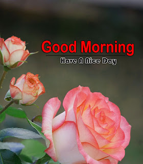 New Good Morning 4k Full HD Images Download For Daily%2B23