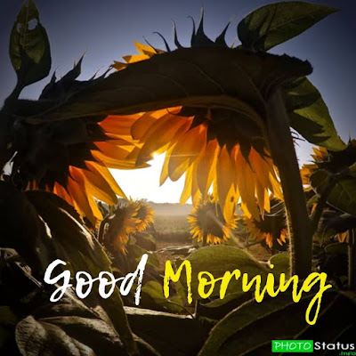 good morning have a nice day status