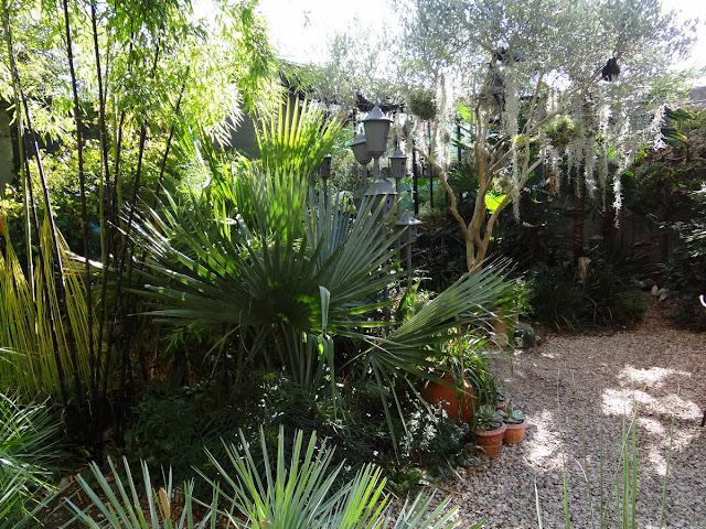 (07) Le jardin de Bésignoles - Privas - Page 4 DSC00325