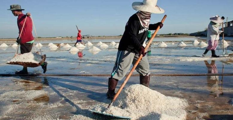 Pemerintah Berencana Mengimpor Garam, PKS: Kasian Para Petani
