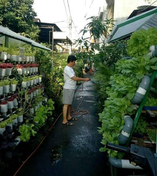 Jakarta Pusat Kini Memiliki 150 Lokasi Urban Farming