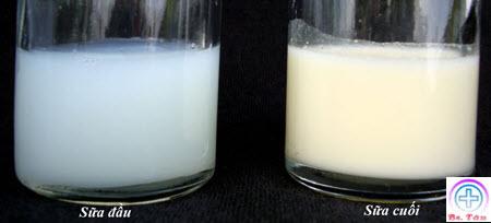 phân biệt sữa đầu và sữa cuối