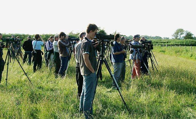 Botswana Birdwatching