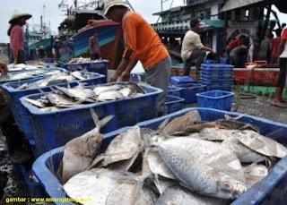 Faktor Yang Mempengaruhi Pembusukan Ikan
