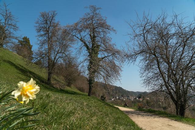 Wandern Konstanz Bodensee SeeGang Etappe 3 - Riedwiesen und Steiluferlandschaften am Überlinger See: Von Bodman durchs Aachried nach Ludwigshafen und auf dem Blütenweg nach Sipplingen 14