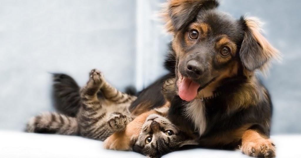 Chi preferisce i gatti è più intelligente, chi preferisce i cani è più felice