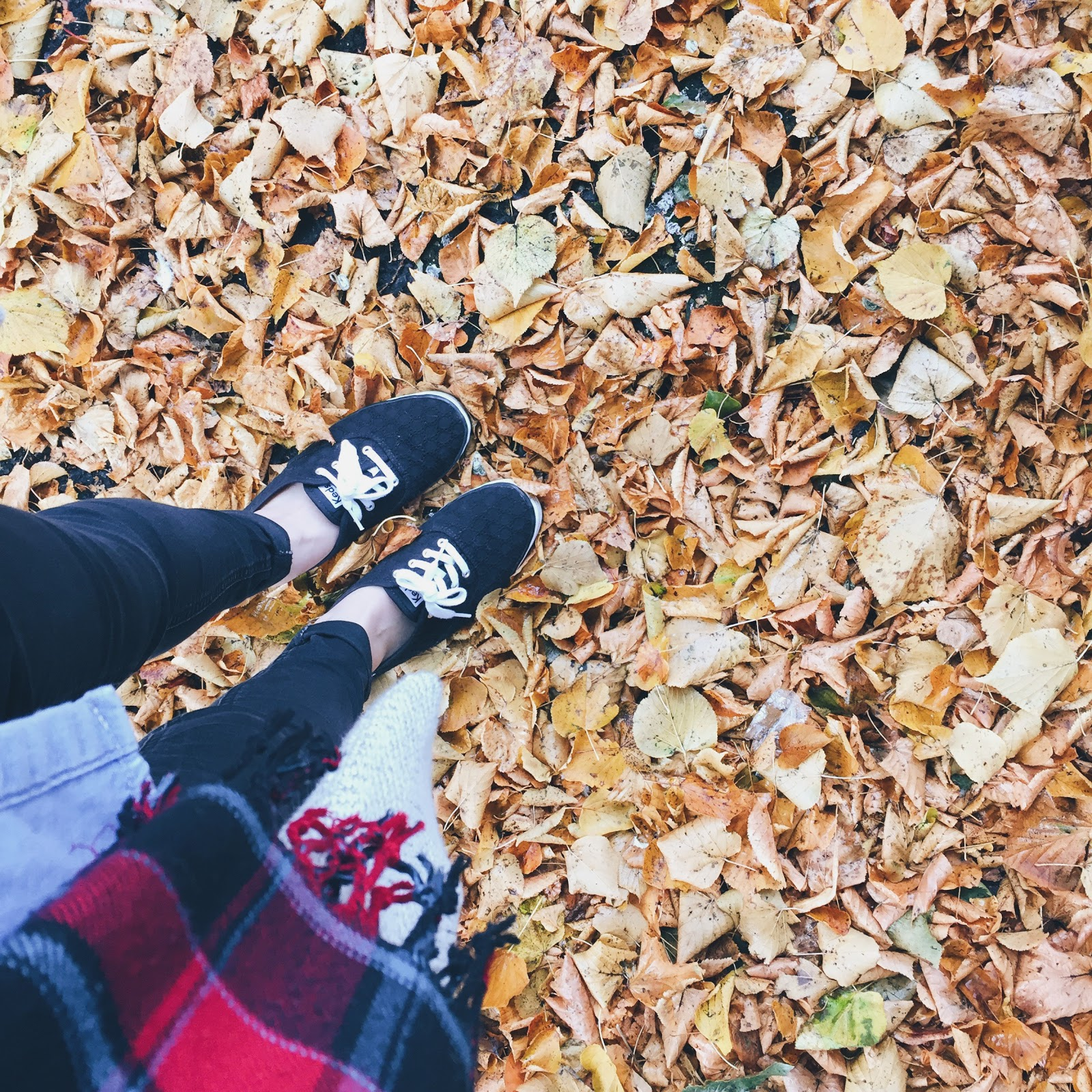 from where i stand autumn leaves