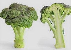 Broccoli Benefits How to Use Broccoli in Yours Daily Life Routine and Some Important Impacts