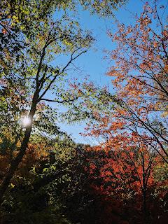 Sun And Maple Trees, Greenlink Trail, Cape Breton Island