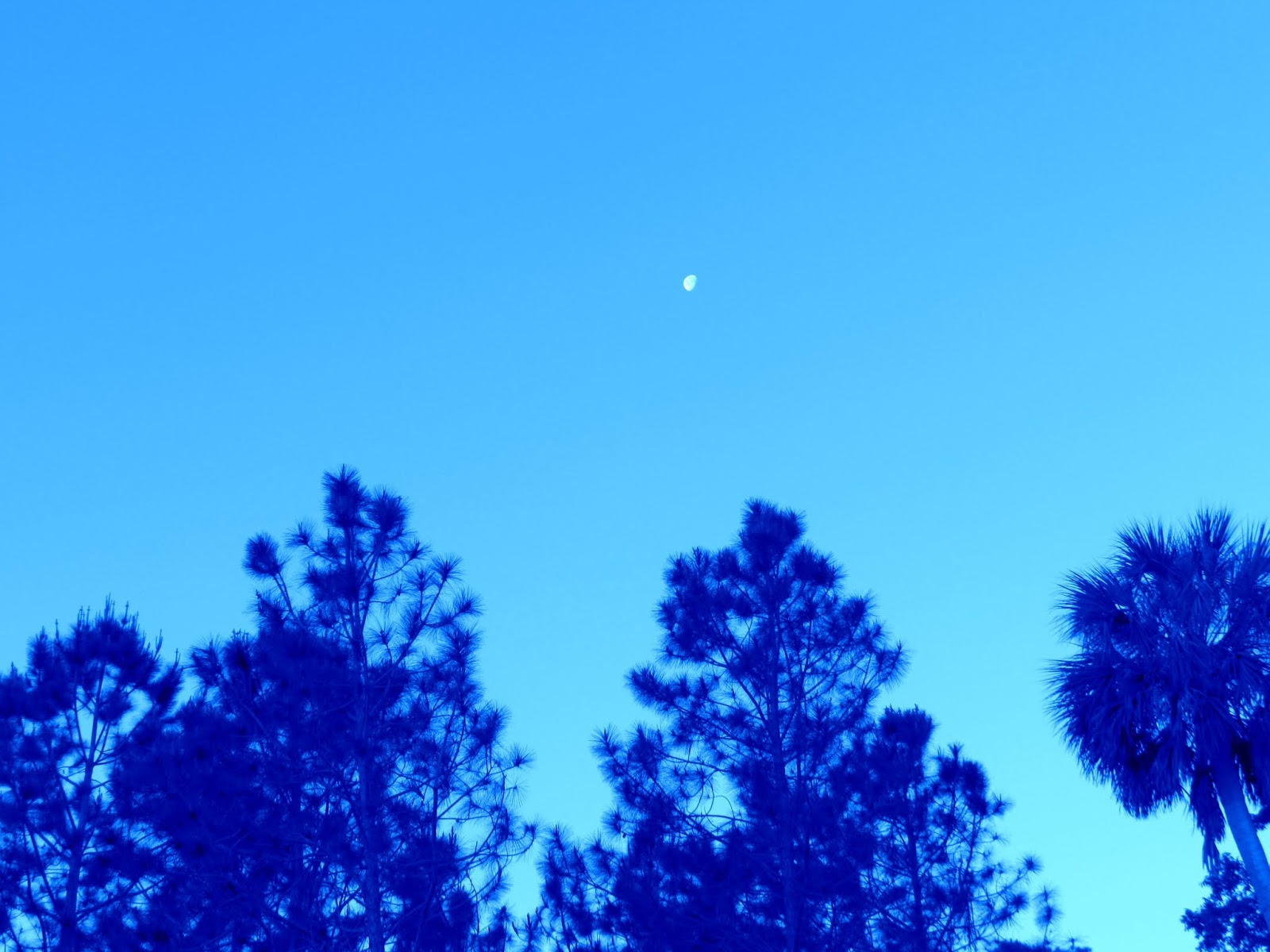 A clearing of trees in Florida with a sliver of moon at dusk